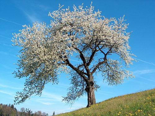 Nevruz - www.turkosfer.com